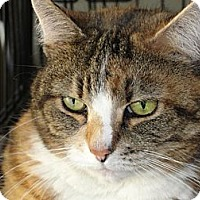 Adopt A Pet :: Patty - Riverside, RI