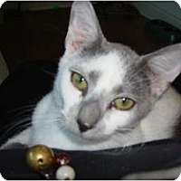 Adopt A Pet :: Tom - Lake Charles, LA