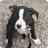 Adopt A Pet :: Winnie - Dallas, PA