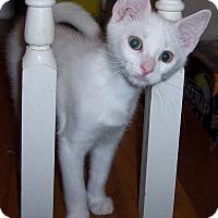 Adopt A Pet :: Eskimo - Richmond, VA