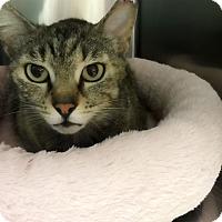 Adopt A Pet :: Charlize - Los Angeles, CA