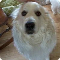 Adopt A Pet :: Luna -Adoption pending - Tipp City, OH