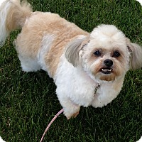 Adopt A Pet :: Missy - Washington, PA