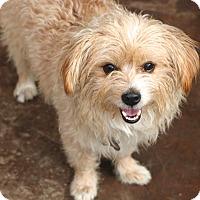 Adopt A Pet :: Fenwood - MEET ME - Norwalk, CT