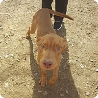 Adopt A Pet :: Delgado - Gadsden, AL