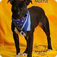 Adopt A Pet :: Matrix - Topeka, KS