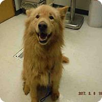 Adopt A Pet :: SHASTA - Oroville, CA