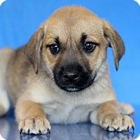 Adopt A Pet :: Maine - Waldorf, MD