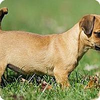 Adopt A Pet :: Cassidy - Providence, RI