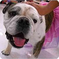 Adopt A Pet :: Hugs*adoption pending* - Gilbert, AZ