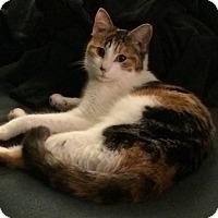 Adopt A Pet :: Mickie D. - St. Louis, MO
