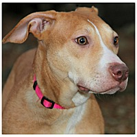 Adopt A Pet :: Peach - Forked River, NJ