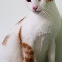 Adopt A Pet :: Chopper - Sistersville, WV