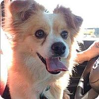 Adopt A Pet :: Frito - Encino, CA