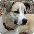Adopt A Pet :: Luka