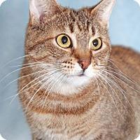 Adopt A Pet :: Helena - Encinitas, CA