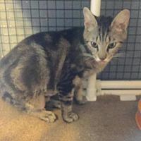 Adopt A Pet :: Marabel - Tampa, FL