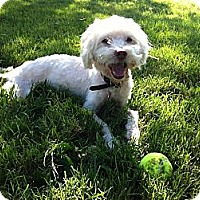 Adopt A Pet :: Max - Lake Forest, CA