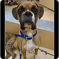 Adopt A Pet :: Ken - Scottsdale, AZ