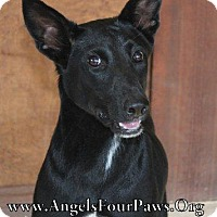 Pointer Mix Dog for adoption in Humble, Texas - DIXXIE