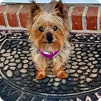 Adopt A Pet :: Gunner - Ashland City, TN