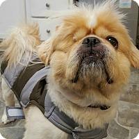 Adopt A Pet :: Cooper - Fennville, MI