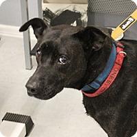 Adopt A Pet :: Coco - Owasso, OK