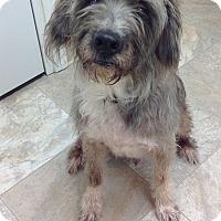 Adopt A Pet :: Chip - Urbana, OH
