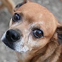 Adopt A Pet :: Nick - Jarrell, TX