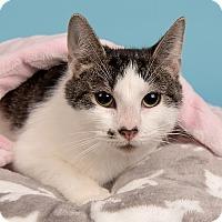 Adopt A Pet :: Baby Girl - Wilmington, DE