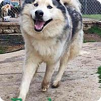 Adopt A Pet :: Fred - Carrollton, TX