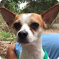 Adopt A Pet :: Scooter - Orlando, FL