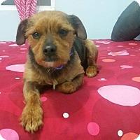 Adopt A Pet :: Bongo - San Ysidro, CA