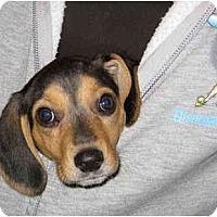 Adopt A Pet :: Hope - Portland, OR