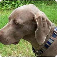 Adopt A Pet :: Diego  **ADOPTED** - Eustis, FL