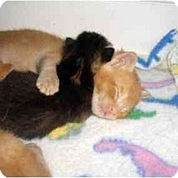 Adopt A Pet :: Jagger - Richmond, VA