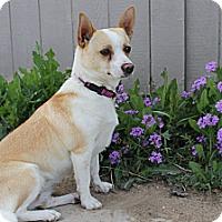 Adopt A Pet :: Wanda - Fountain, CO