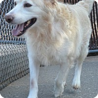 Adopt A Pet :: Ty - White River Junction, VT