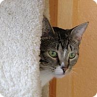 Adopt A Pet :: Stream - Port Jervis, NY