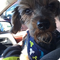Adopt A Pet :: Adopted! Eliot - Bowie, MD