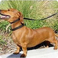 Adopt A Pet :: Briana - San Jose, CA