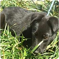 Adopt A Pet :: Poppy - Sugarland, TX
