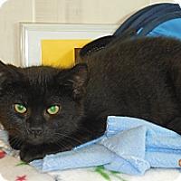 Adopt A Pet :: Clover - CARVER, MA