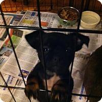 Adopt A Pet :: Squirt - Staunton, VA