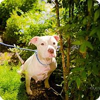Adopt A Pet :: Grace - San Antonio, TX