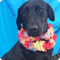 Adopt A Pet :: VINNY, gorgeous! - Irvine, CA