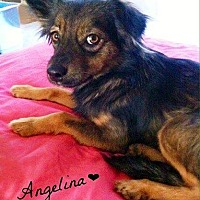 Adopt A Pet :: Angelina - Bakersfield, CA