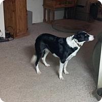 Adopt A Pet :: COOPER - Nampa, ID
