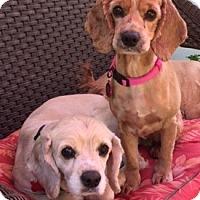 Adopt A Pet :: Jorgia and Jayden - Sacramento, CA