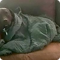 Adopt A Pet :: Harriet - New Hartford, NY